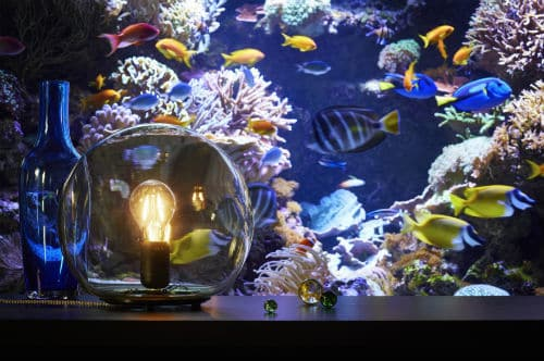FADO Tafel lamp