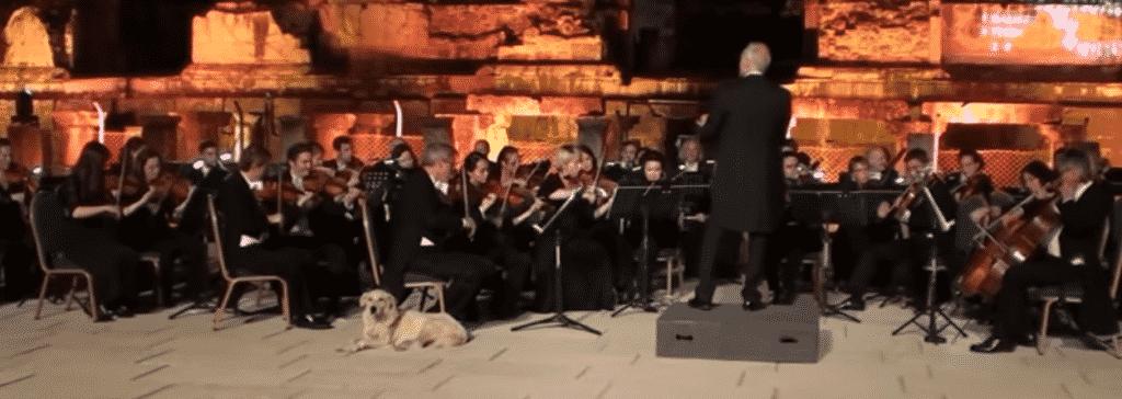 Labrador Klassiek Orkest