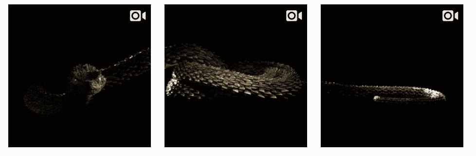 Slangen Taylor Swift